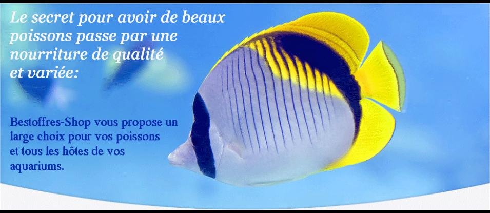 01  beaux poissons avec la nourriture de bestoffres-shop