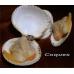 Coques entiéres congelées - blister 100gr par 10 soit 1kg