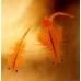 Artémias vivants, lot de 10 barquettes 100ml