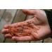 Krill Superba et superbe congelé en barquette de 100gr par 10