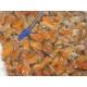 Moules entières en sachet de 100gr en lot de 10 soit 1 kg